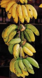 Joel's previous research looked at using banana peels as a Biofuel.